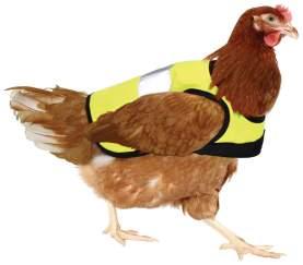 Chicken_hi_vis_jacket_yellow_chicken